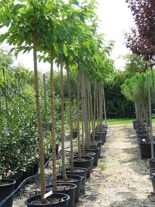 grand pot pour arbre arbre bougeoir photophore candelabre. Black Bedroom Furniture Sets. Home Design Ideas